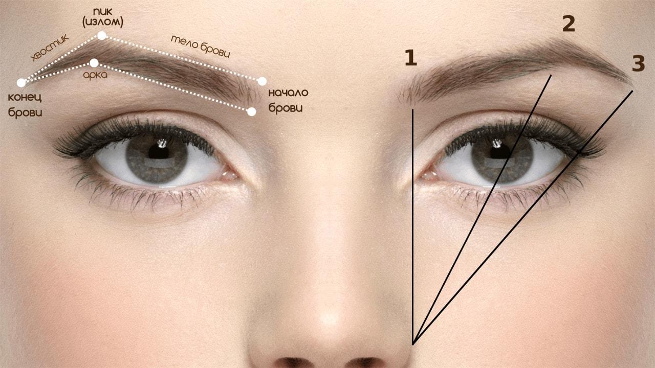 eyebrows article 6